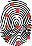 Minuzien - Papillarleisten des Fingerabdrucks | Almas Iindustries